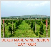 Dealu Mare wine region 1 day tour