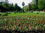 Cismigiu Garden, the centrallawn