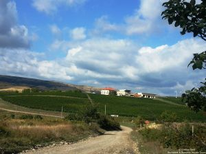 Lacerta Winery, Dealu Mare Wine Region