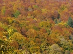 Fall colors, Carpathian mountains,Transylvania