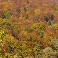 Fall colors, Carpathian mountains, Transylvania