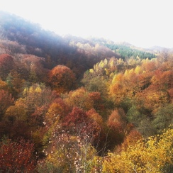 Colorful vistas in Marginimea Sibiului mountain area, southern Transylvania