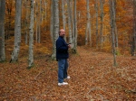 Walk through beech forest in Eastern Carpathians, Transylvania