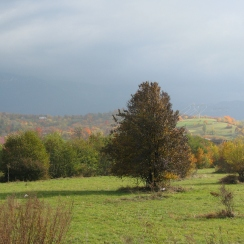 October landscape at Bran, Transylvania