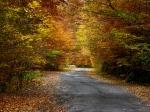 Road to Sf Ana Lake, eastern Carpathians,Transylvania