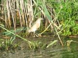 Inhabitant of the Danube Delta