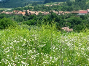 Early summer in southern Transylvania