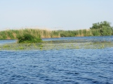 Lake landscape in the Danube Delta in May