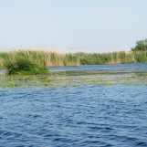 Lake landscape in the Danube Delta in May