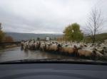 Traffic Jam inTransylvania