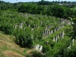 The Jewish Cemetery, Siret, northernMoldova