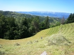 Cutting hay by hand with scythe, Carpathian Mountains, Bran area,Transylvania