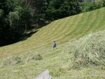 Cutting hay by hand with scythe, traditional summer activity in the Carpathian Mountains,Transylvania