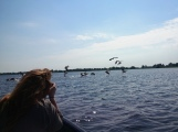 Danube Delta pelicans morning photography